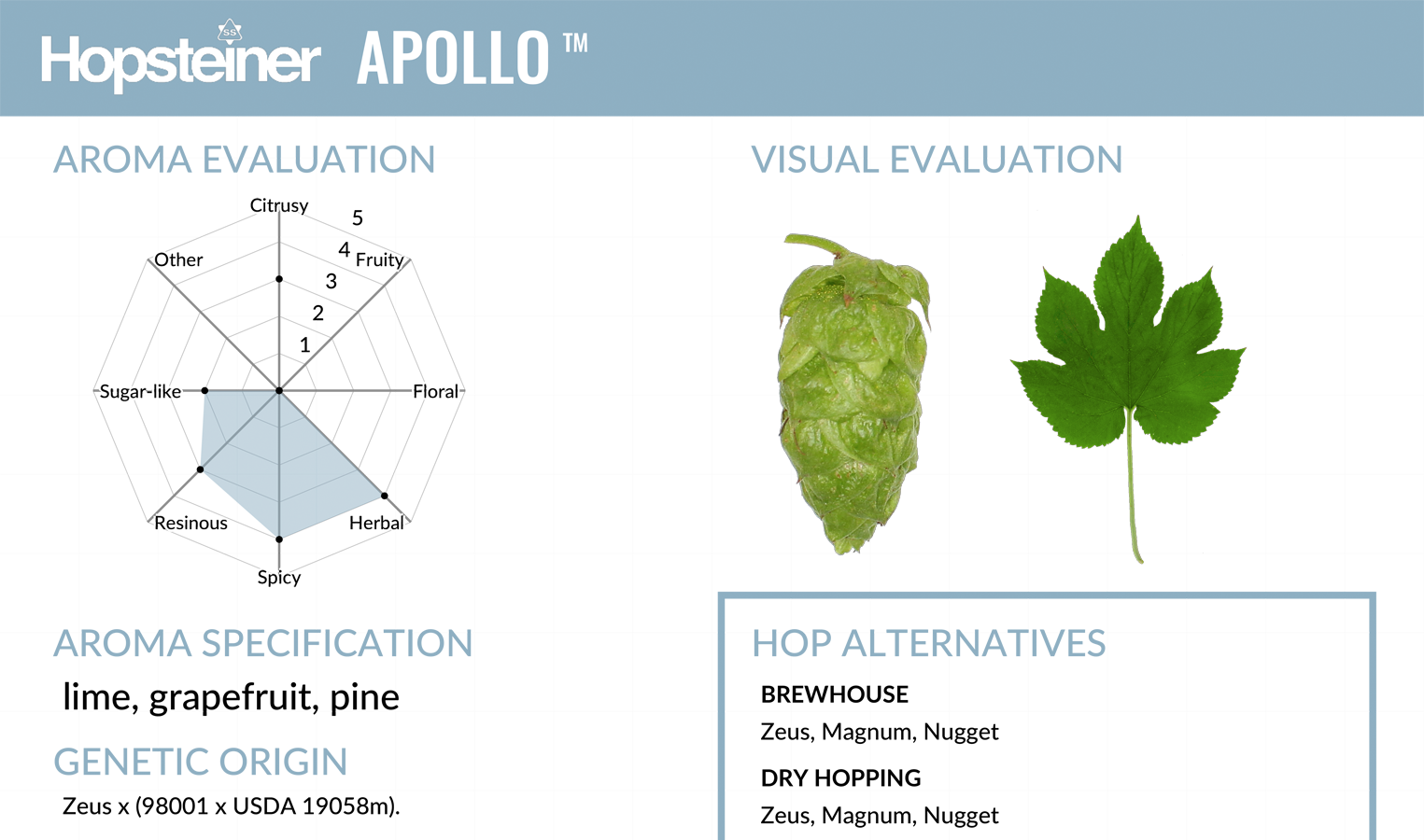 Hop Variety Preview - Apollo